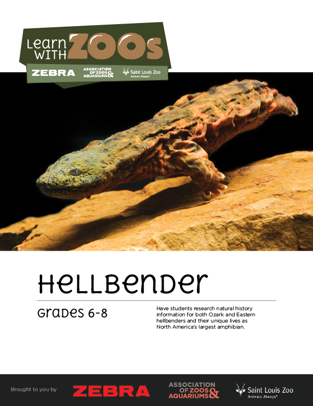 Hellbender Math Activity 6-8
